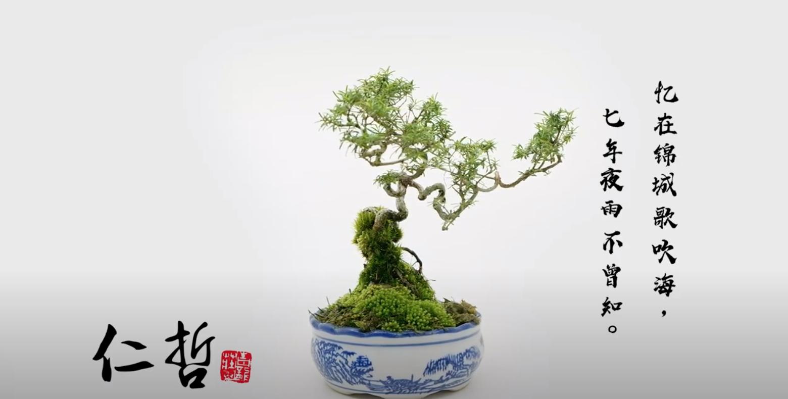 Bonsai | Product Video | Bonsai Malaysia